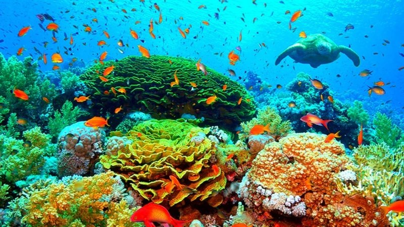 Queensland Coral Reefs